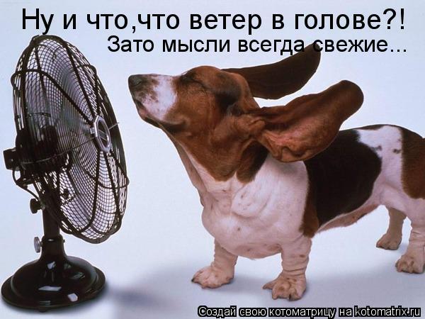 Котоматрица: Ну и что,что ветер в голове?! Зато мысли всегда свежие...