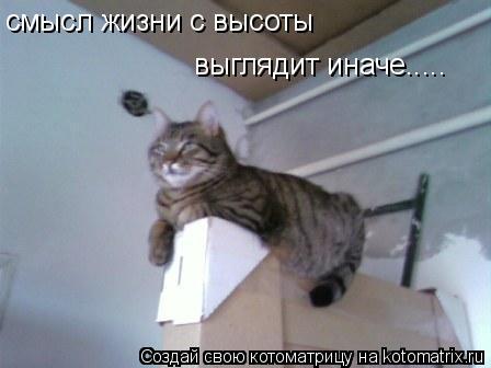 Котоматрица: смысл жизни с высоты выглядит иначе.....