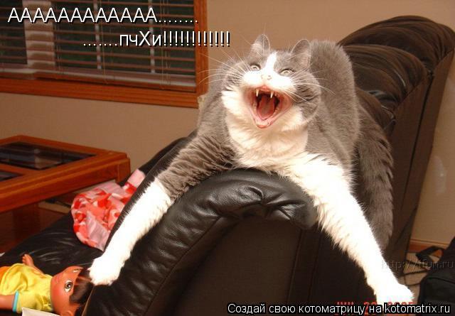 Котоматрица: АААААААААААА........ .......пчХи!!!!!!!!!!!!