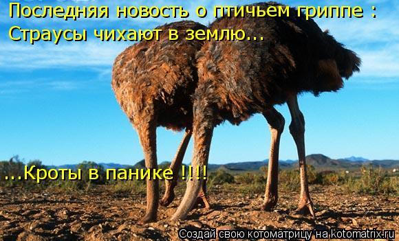Котоматрица: Последняя новость о птичьем гриппе : Страусы чихают в землю... ...Кроты в панике !!!!