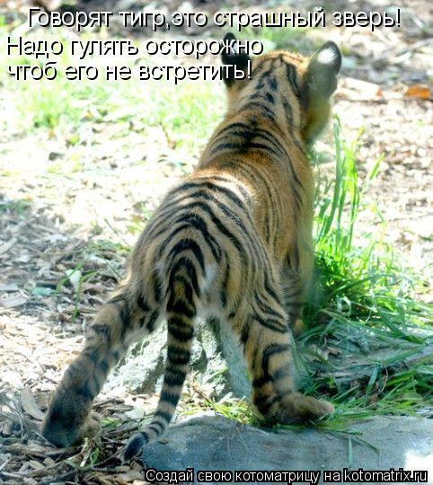 Котоматрица: Говорят тигр,это страшный зверь! Надо гулять осторожно  чтоб его не встретить!