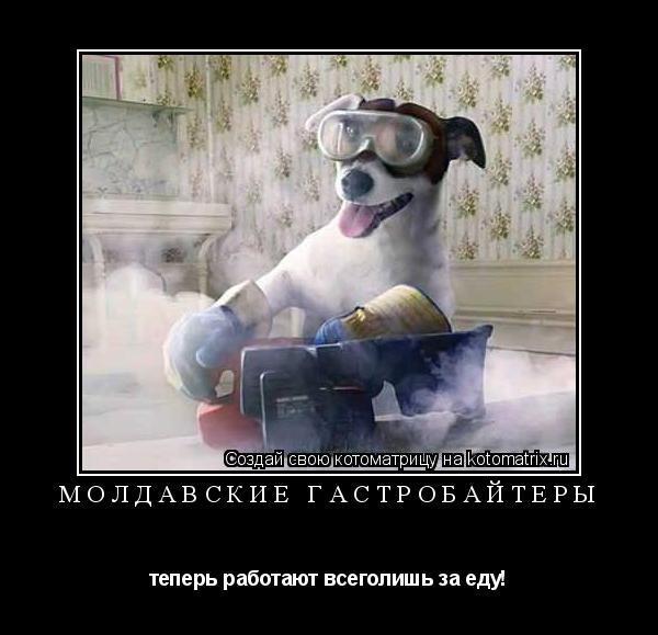 Котоматрица: Молдавские Гастробайтеры теперь работают всеголишь за еду!