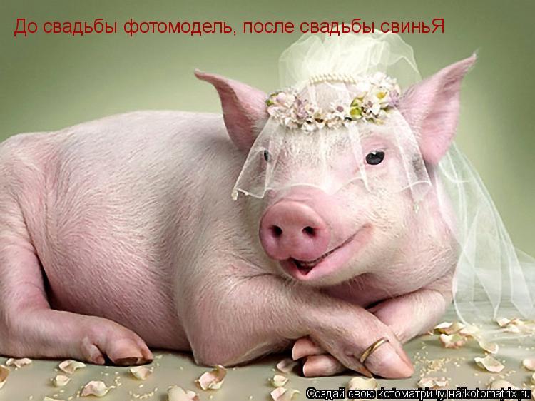Котоматрица: До свадьбы фотомодель, после свадьбы свиньЯ