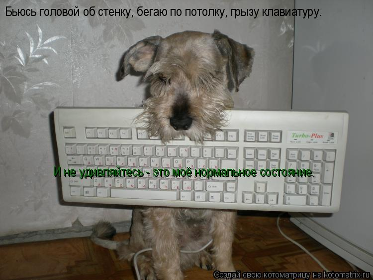 Котоматрица: Бьюсь головой об стенку, бегаю по потолку, грызу клавиатуру… И не удивляйтесь - это моё нормальное состояние.