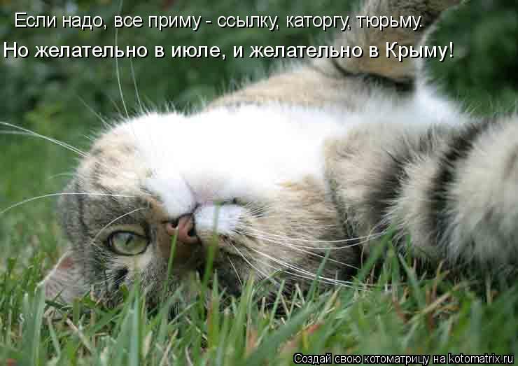 Котоматрица: Если надо, все приму - ссылку, каторгу, тюрьму. Но желательно в июле, и желательно в Крыму!