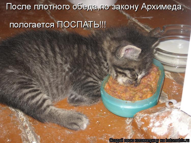 Котоматрица: После плотного обеда,по закону Архимеда, пологается ПОСПАТЬ!!!