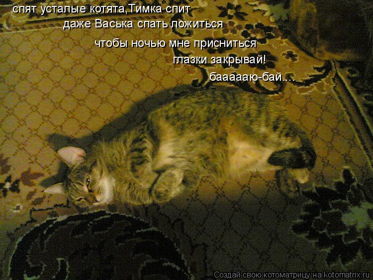 Котоматрица: спят усталые котята,Тимка спит даже Васька спать ложиться  чтобы ночью мне присниться  глазки закрывай! баааааю-бай....