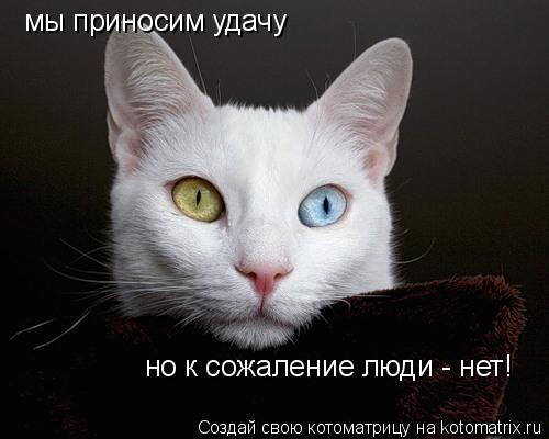 Котоматрица: мы приносим удачу но к сожаление люди - нет!