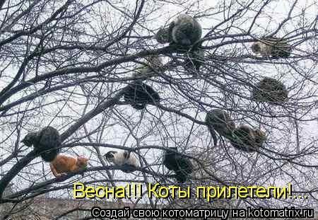 Котоматрица: Весна!!! Коты прилетели!...