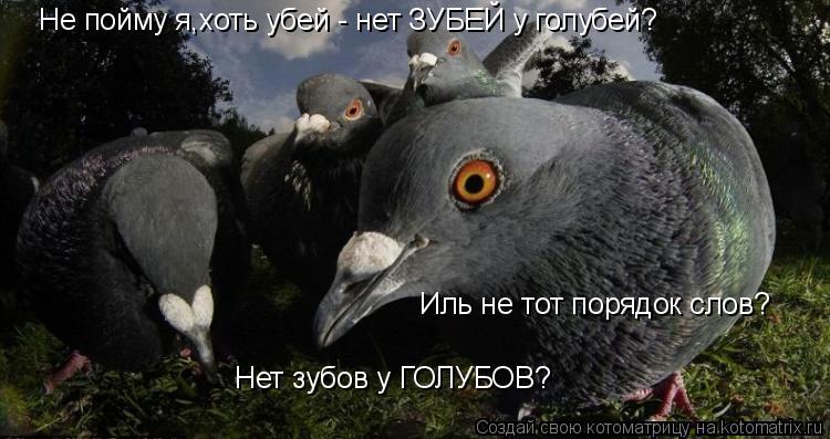 Котоматрица: Не пойму я,хоть убей - нет ЗУБЕЙ у голубей? Иль не тот порядок слов? Нет зубов у ГОЛУБОВ?