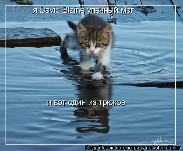 Котоматрица: я David Blaine улечный маг  и вот один из трюков