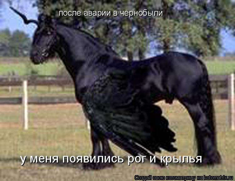Котоматрица: после аварии в чернобыли у меня появились рог и крылья