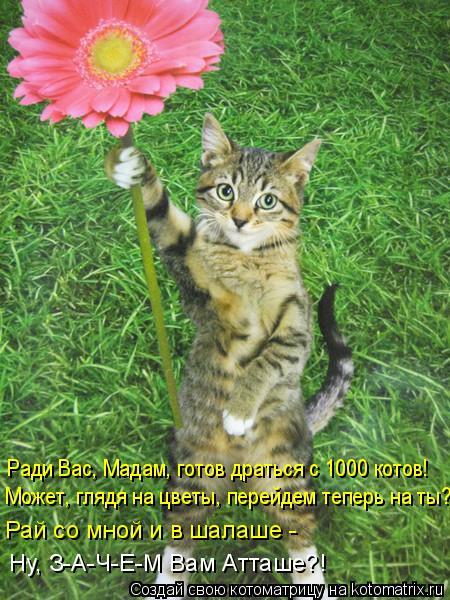Котоматрица: Ради Вас, Мадам, готов драться с 1000 котов! Может, глядя на цветы, перейдем теперь на ты? Рай со мной и в шалаше - Ну, З-А-Ч-Е-М Вам Атташе?!