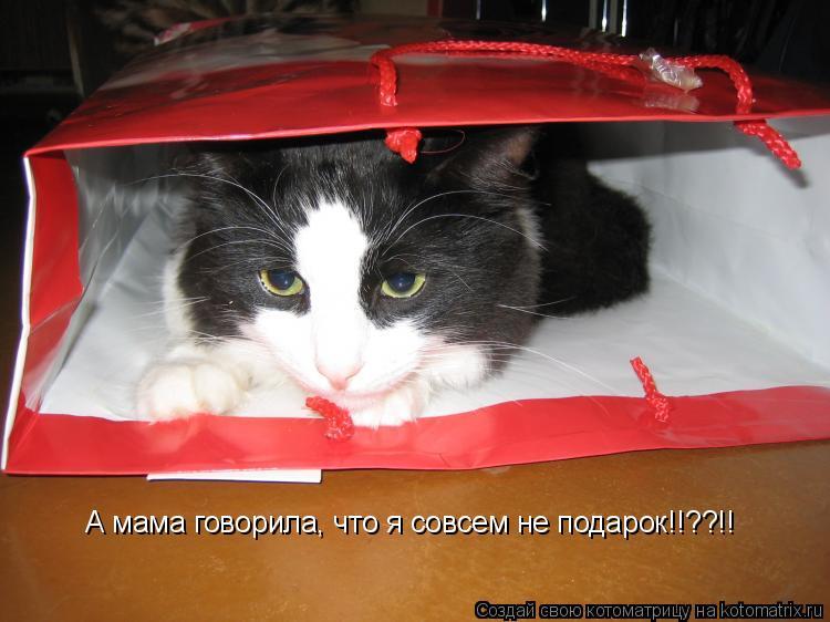 Котоматрица: А мама говорила, что я совсем не подарок!!??!!