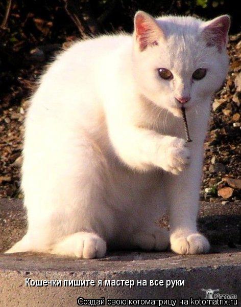 Котоматрица: Кошечки пишите я мастер на все руки