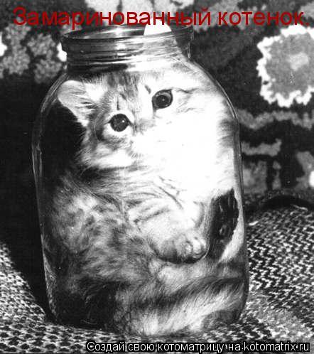 Котоматрица: Замаринованный котенок.