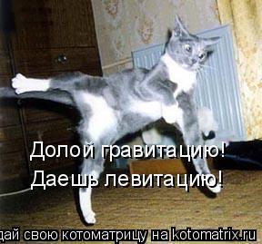 Котоматрица: Долой гравитацию! Даешь левитацию!