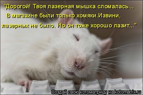 """Котоматрица: """"Дорогой! Твоя лазерная мышка сломалась... В магазине были только хомяки.Извини, лазерных не было. Но он тоже хорошо лазит..."""""""