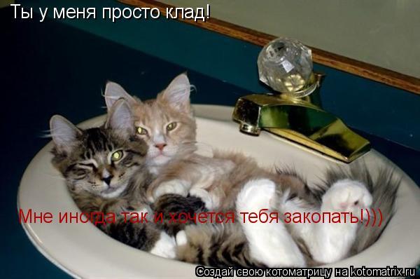 Котоматрица: Ты у меня просто клад! Мне иногда так и хочется тебя закопать!)))