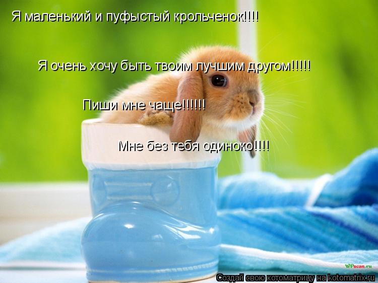 Котоматрица: Я маленький и пуфыстый крольченок!!!! Я очень хочу быть твоим лучшим другом!!!!! Пиши мне чаще!!!!!! Мне без тебя одиноко!!!!