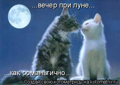 Котоматрица: ...вечер при луне... ...как романьтично...
