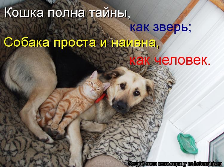 Котоматрица: Кошка полна тайны,  как зверь; Собака проста и наивна, как человек.