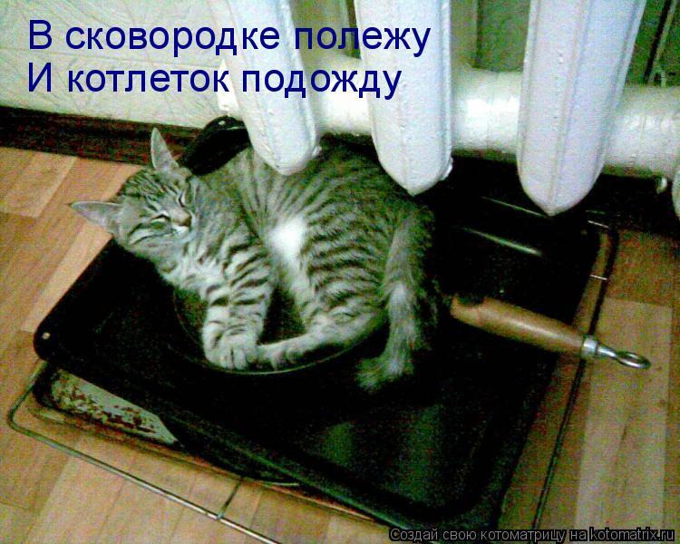 Котоматрица: В сковородке полежу И котлеток подожду