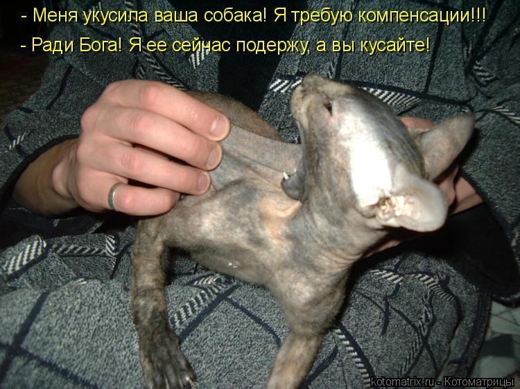 Котоматрица: - Меня укусила ваша собака! Я требую компенсации!!! - Ради Бога! Я ее сейчас подержу, а вы кусайте!