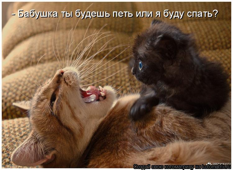 Котоматрица: - Бабушка ты будешь петь или я буду спать?