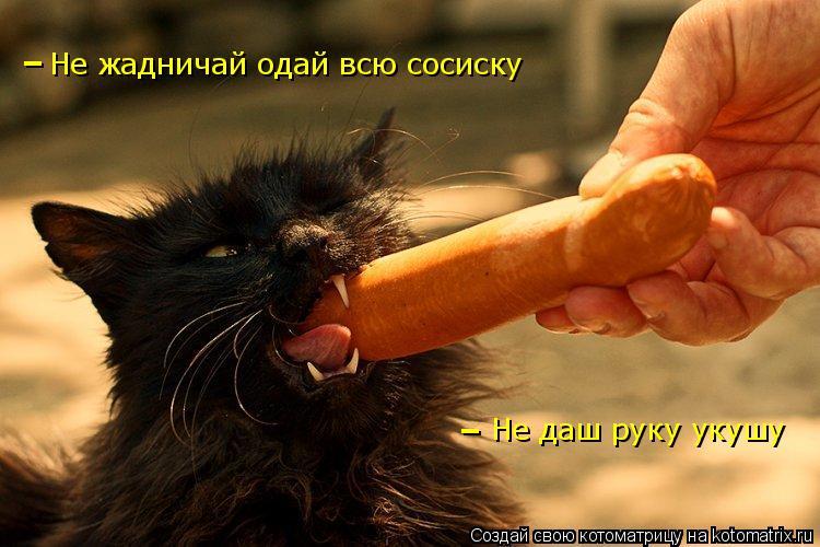 Котоматрица: Не жадничай одай всю сосиску Не даш руку укушу - - -