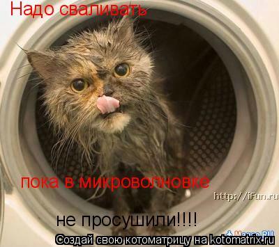 Котоматрица: Надо сваливать  пока в микроволновке не просушили!!!!