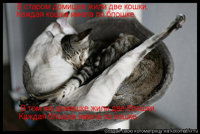 Котоматрица: В старом домишке жили две кошки, Каждая кошка имела по блошке. В том же домишке жили две блошки, Каждая блошка имела по кошке.