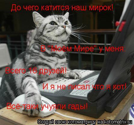 """Котоматрица: До чего катится наш мирок! В """"Моём Мире"""" у меня: Всего 16 друзей! И я не писал что я кот! Всё-таки учуяли гады!"""