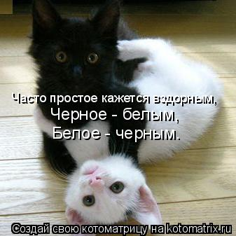 Котоматрица: Часто простое кажется вздорным, Черное - белым, Белое - черным.