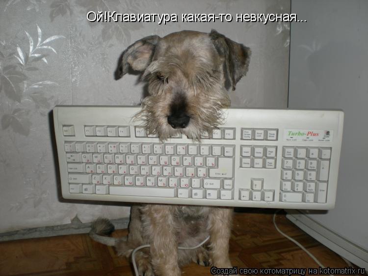 Котоматрица: Ой!Клавиатура какая-то невкусная...