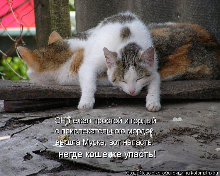 Котоматрица: ОН лежал простой и гордый с привлекательною мордой, вышла Мурка, вот напасть: негде кошечке упасть!