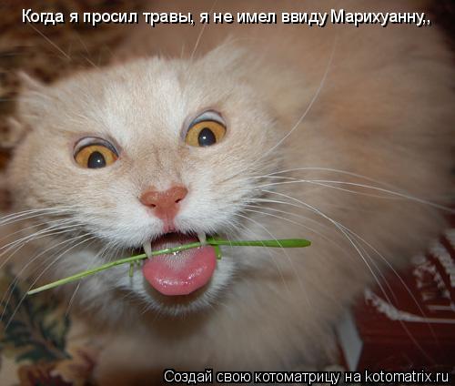 Котоматрица: Когда я просил травы, я не имел ввиду Марихуанну,,