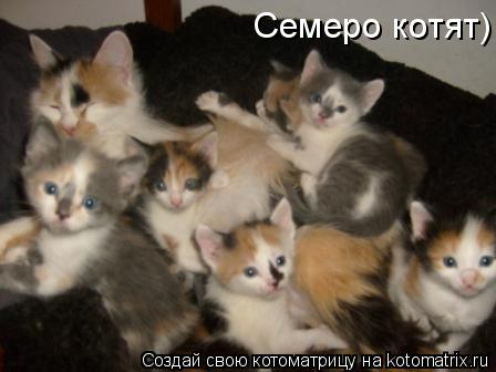 Котоматрица: Семеро котят Семеро котят) Семеро котят)