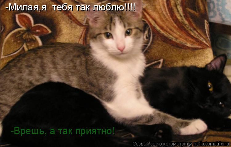 Котоматрица: -Милая,я  тебя так люблю!!!!  -Врешь, а так приятно!