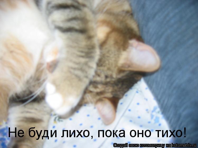 Котоматрица: Не буди лихо, пока оно тихо!
