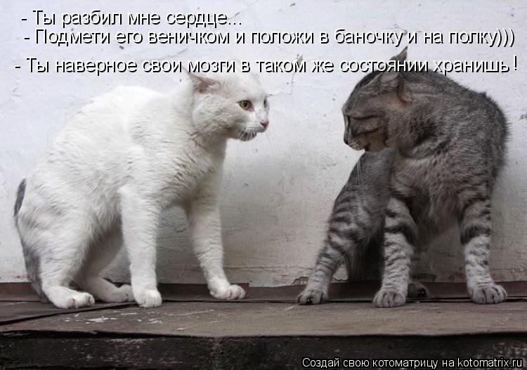 Котоматрица: - Ты разбил мне сердце...  - Подмети его веничком и положи в баночку и на полку))) - Ты наверное свои мозги в таком же состоянии хранишь !