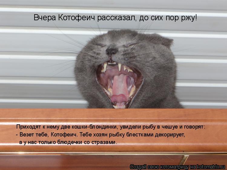 Котоматрица: Вчера Котофеич рассказал, до сих пор ржу! Приходят к нему две кошки-блондинки, увидели рыбу в чешуе и говорят: - Везет тебе, Котофеич. Тебе хоз