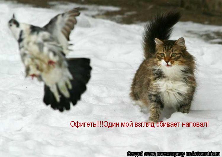 Котоматрица: Офигеть!!!!Один мой взгляд сбивает наповал!