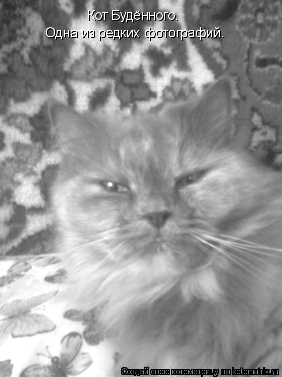 Котоматрица: Кот Будённого. Одна из редких фотографий.