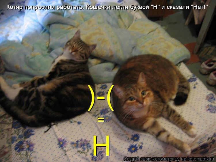"""Котоматрица: )-( Котяр попросили работать. Кошечки легли буквой """"Н"""" и сказали """"Нет!"""" = Н"""