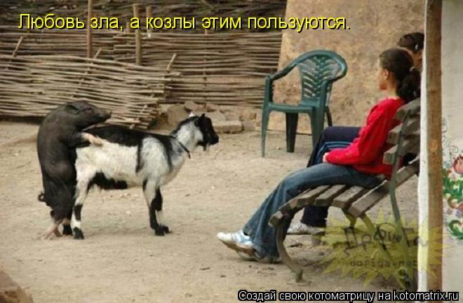 Котоматрица: Любовь зла, а козлы этим пользуются.
