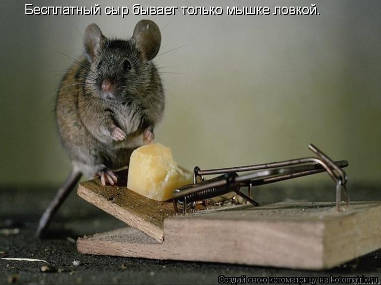 Котоматрица: Бесплатный сыр бывает только мышке ловкой.