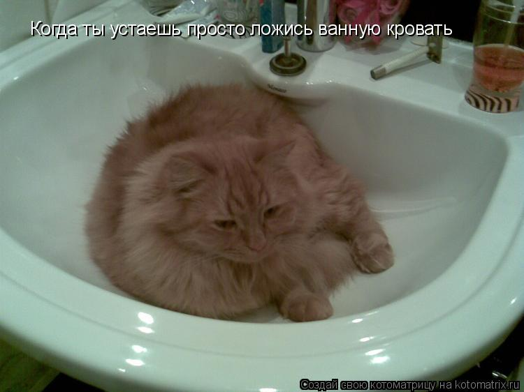 Котоматрица: Когда ты устаешь просто ложись ванную кровать