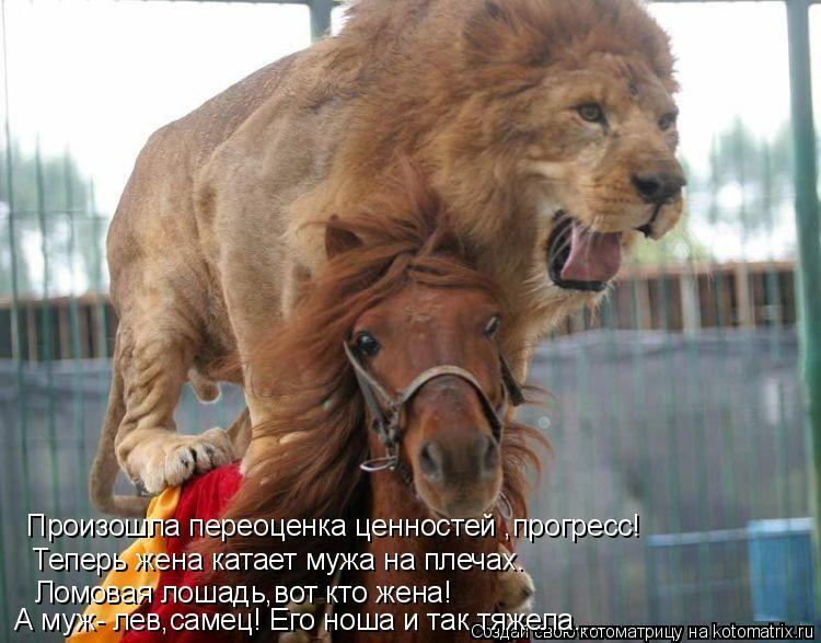 Котоматрица: А муж- лев,самец! Его ноша и так тяжела.... Ломовая лошадь,вот кто жена! Теперь жена катает мужа на плечах. Произошла переоценка ценностей ,про