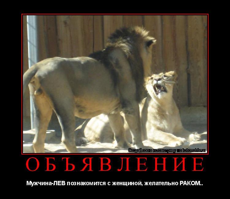 Котоматрица: ОБЪЯВЛЕНИЕ Мужчина-ЛЕВ познакомится с женщиной, желательно РАКОМ..